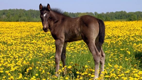 paardpaardenbloemen